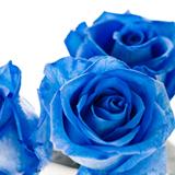第49回81LIVESALON『~声瞬~棘だらけの青い薔薇 Vol.4』