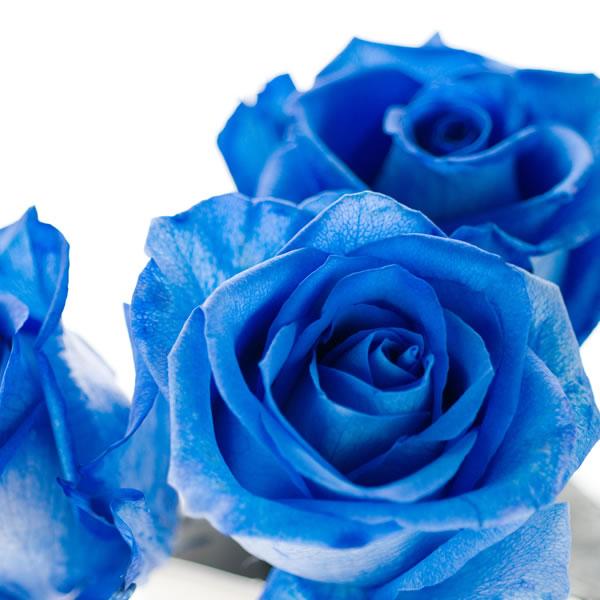 第31回 81LIVESALON 『~声瞬~ 棘だらけの青い薔薇』